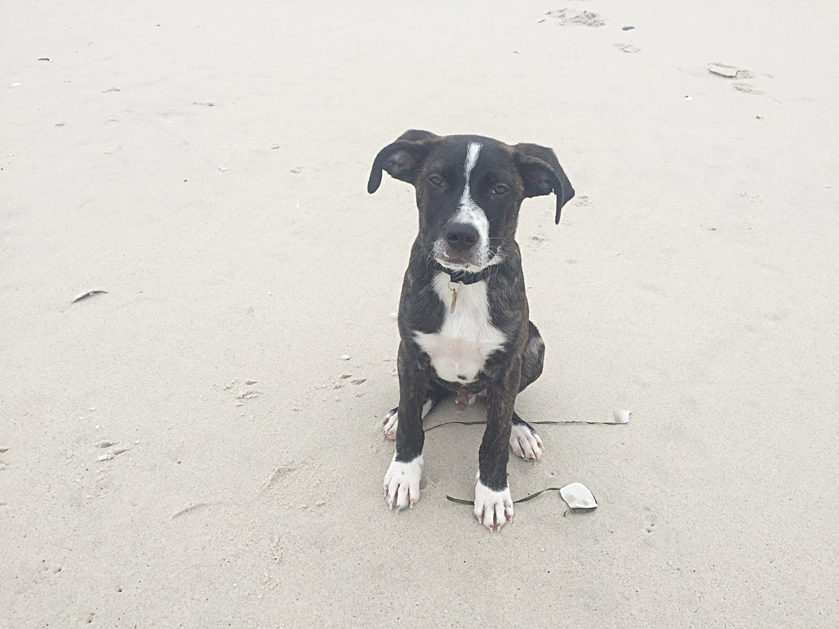 Tonto at the beach in Long Island