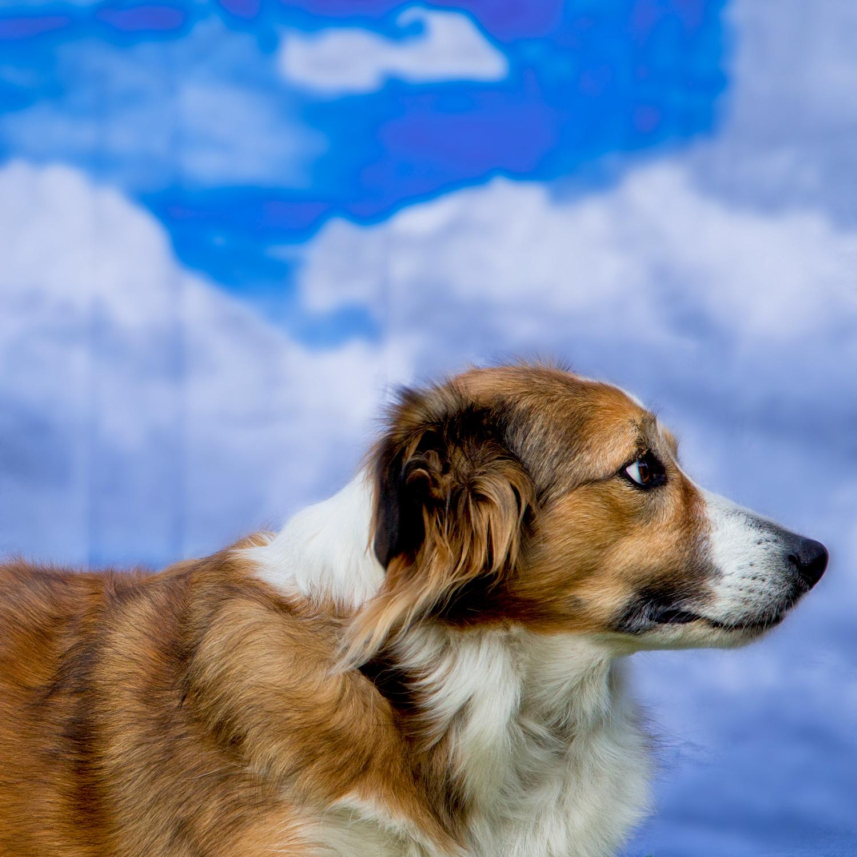 Ella, Nancy's dog