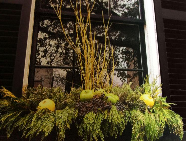 Holiday window box display with pears & greens