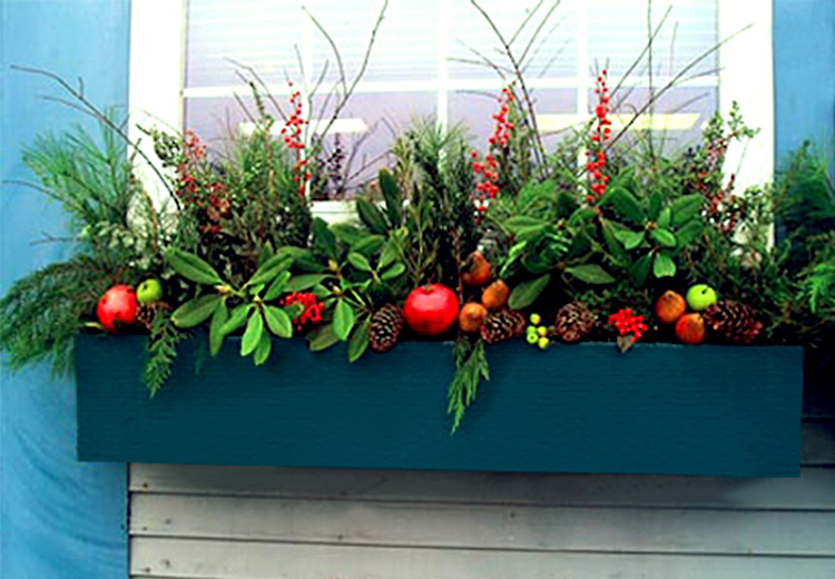 Holiday window box with fruit, berries & boughs