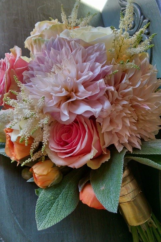 luscious brides bouquet with dahlias, roses, astilbe, ranunculus and lambs ear all in very muted colors.