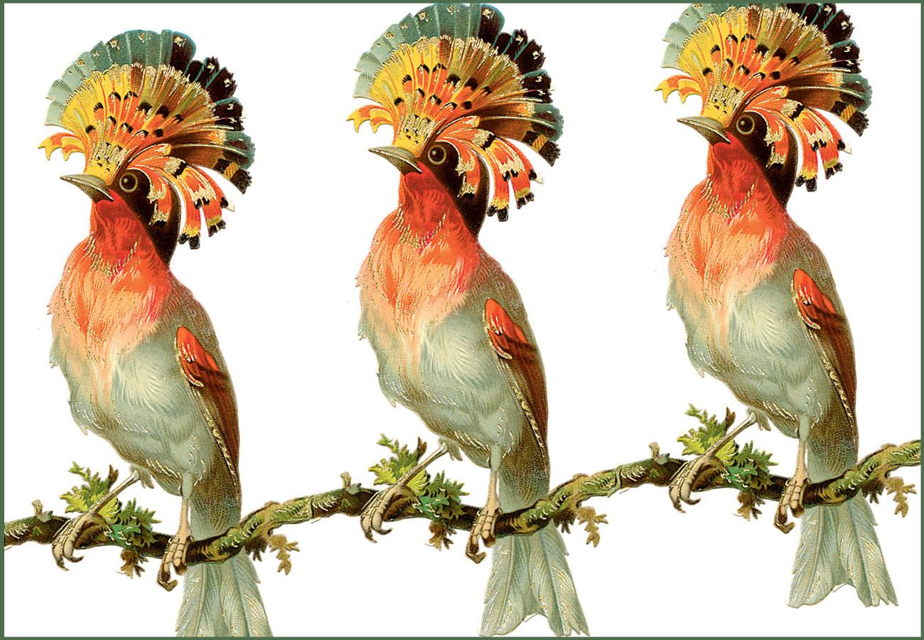 A trio of birds.jpg