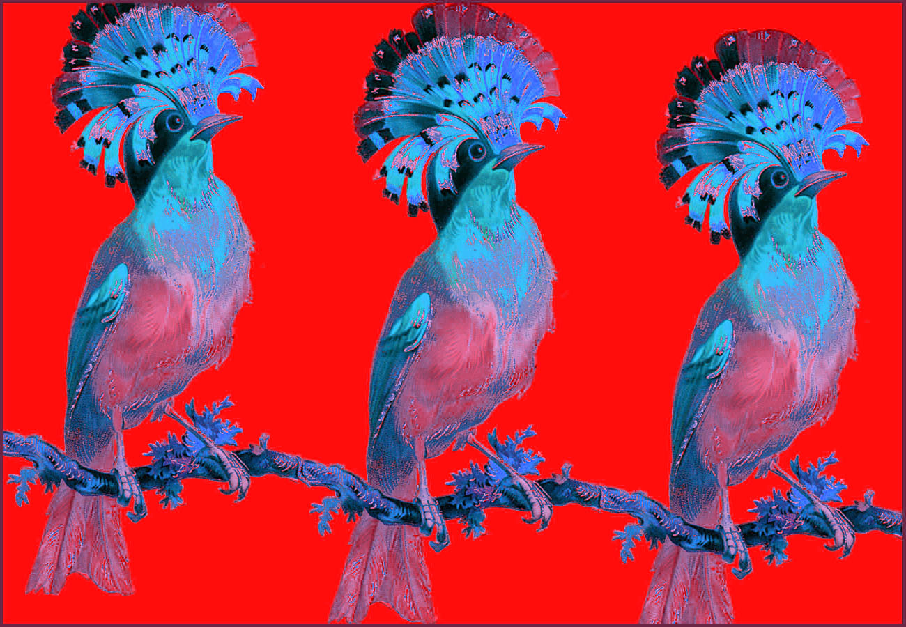 A trio of birds red.jpg