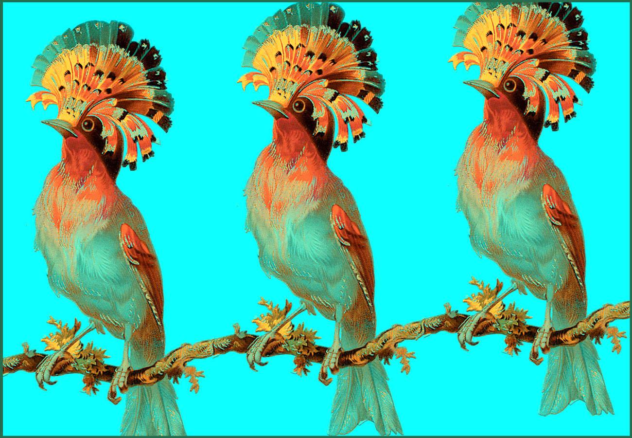 A trio of birds blue.jpg