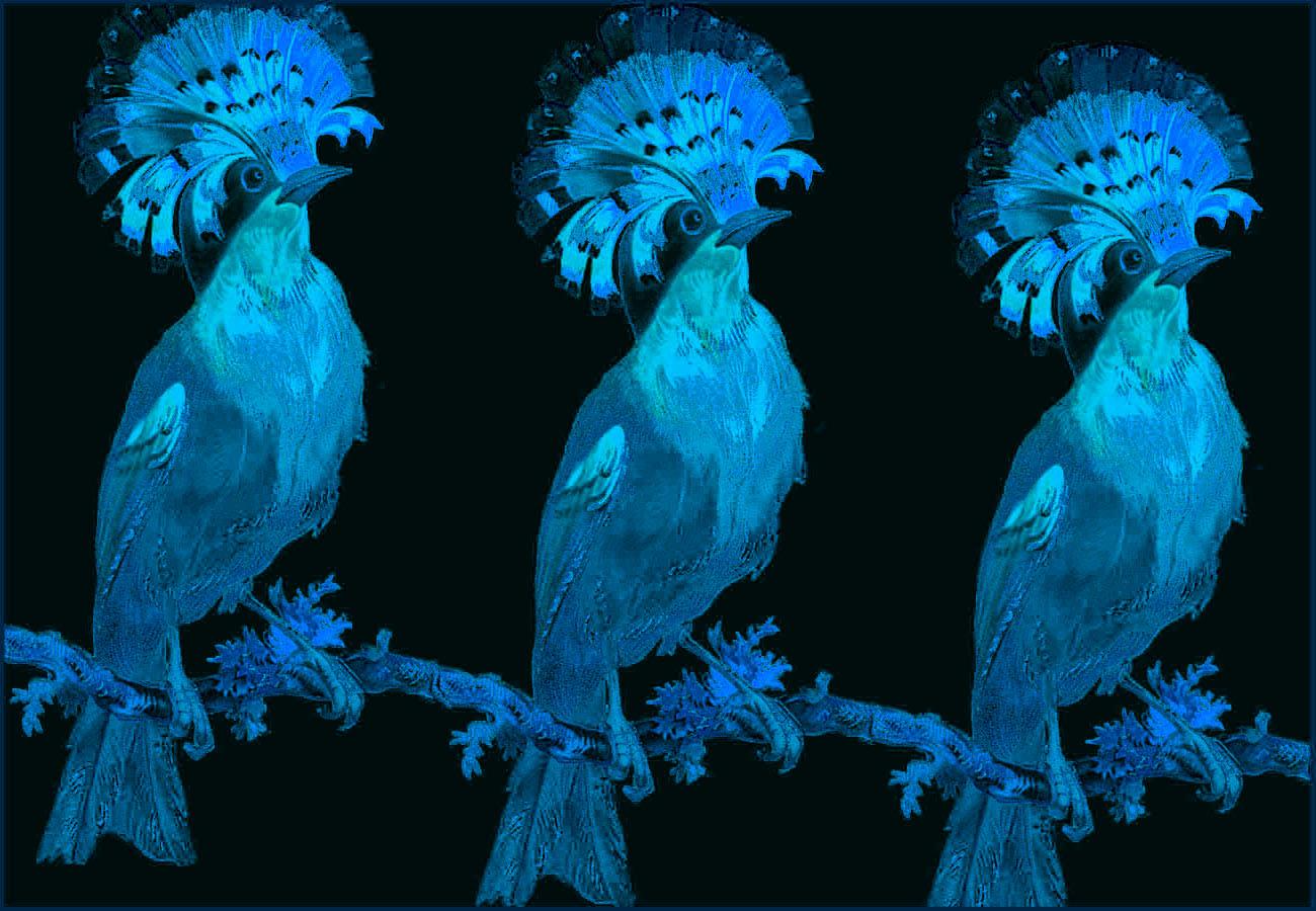 A trio of birds black.jpg