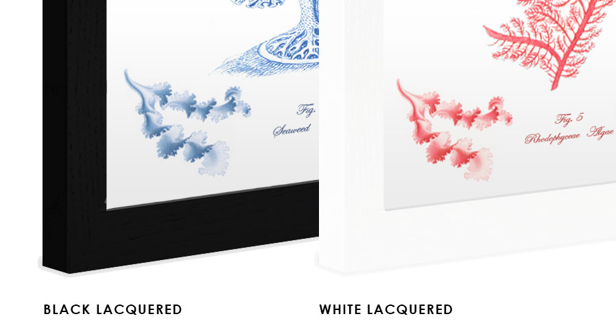 lacquered finished print frames.jpg