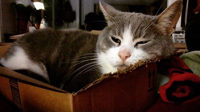 Cat, IN a box. Goodnight lovelies all is well #catinabox #peace #love #pussypower #humanelywild #kindness #worldpeace #paz #whirledpeas #participate #relax #rest #eatwell #sleepwell #wellness