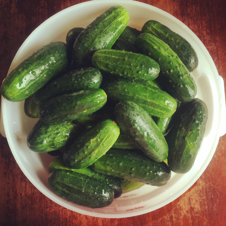 PicklingCukes.jpg