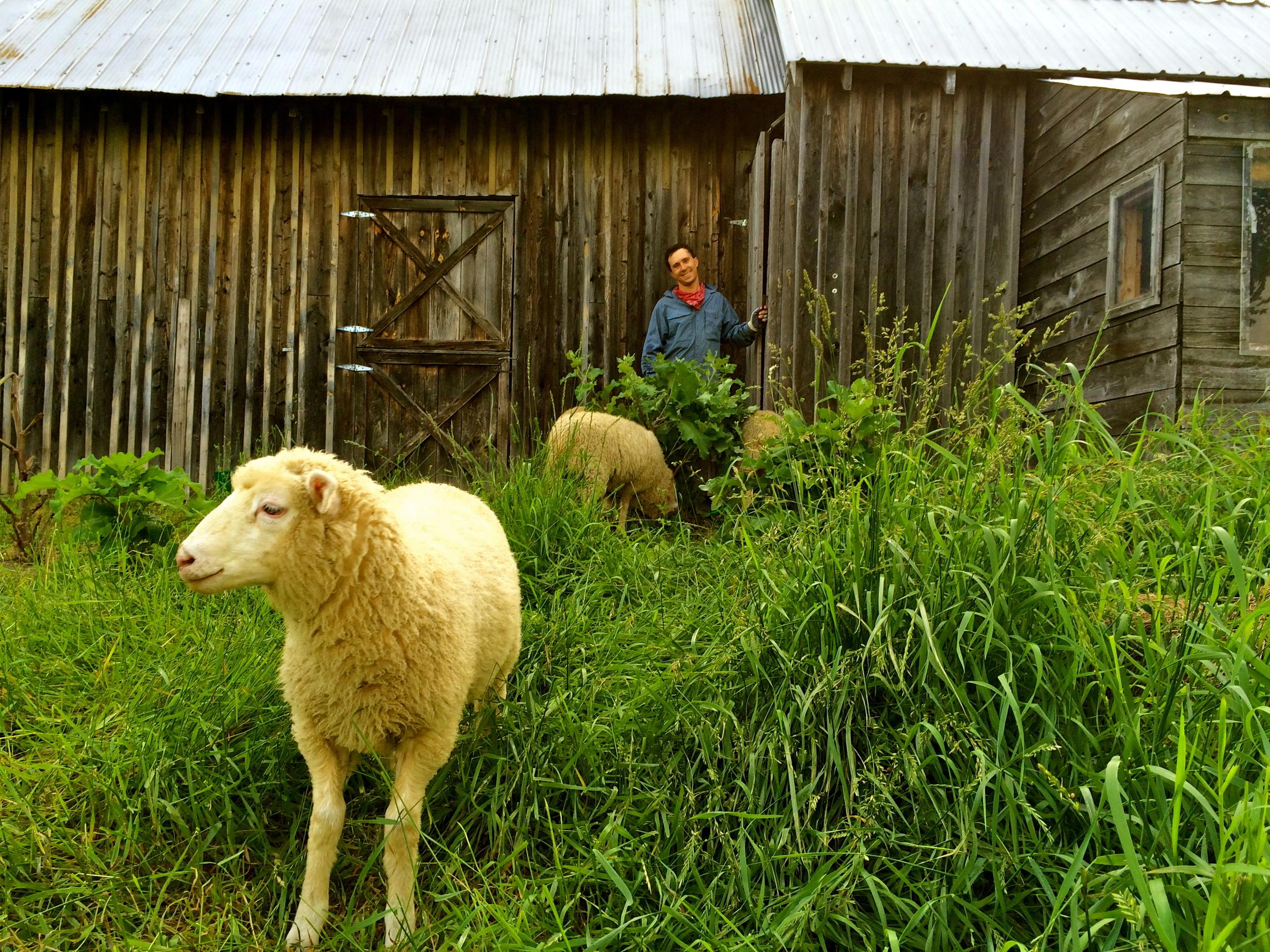 Jason at Wild Rhythms Farm Photo Credit Caitlin Elberson