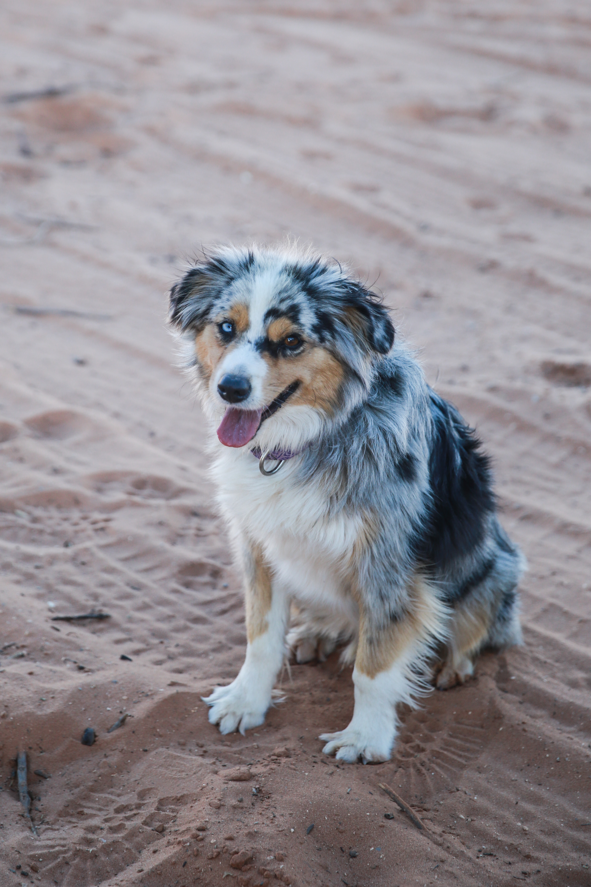 I can't remember this little feller's name, but he ran around us having a grand 'ole time chasing jackrabbits through the desert. I loved his eyes.