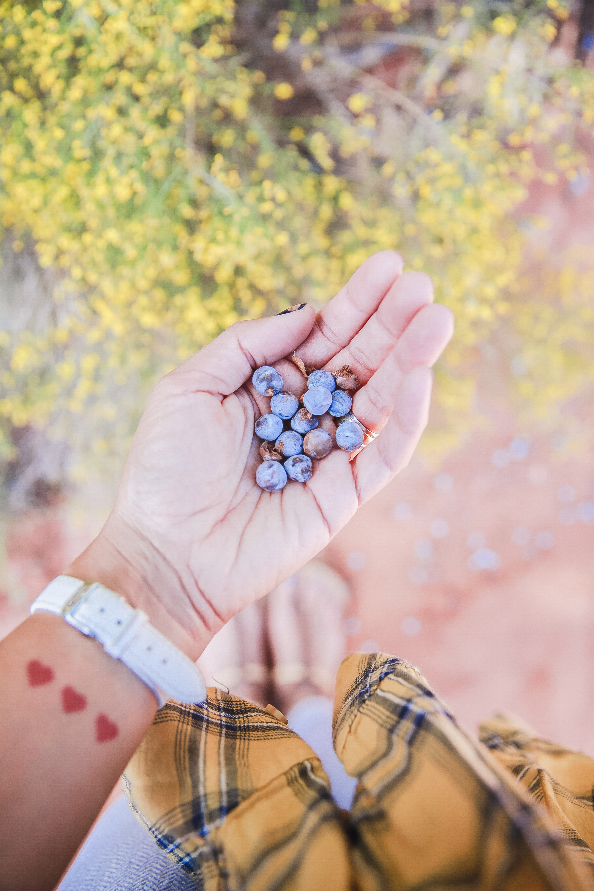 Juniper Berries. Random fact: this is where gin comes from. If only I had some tonic and a few limes! ;)
