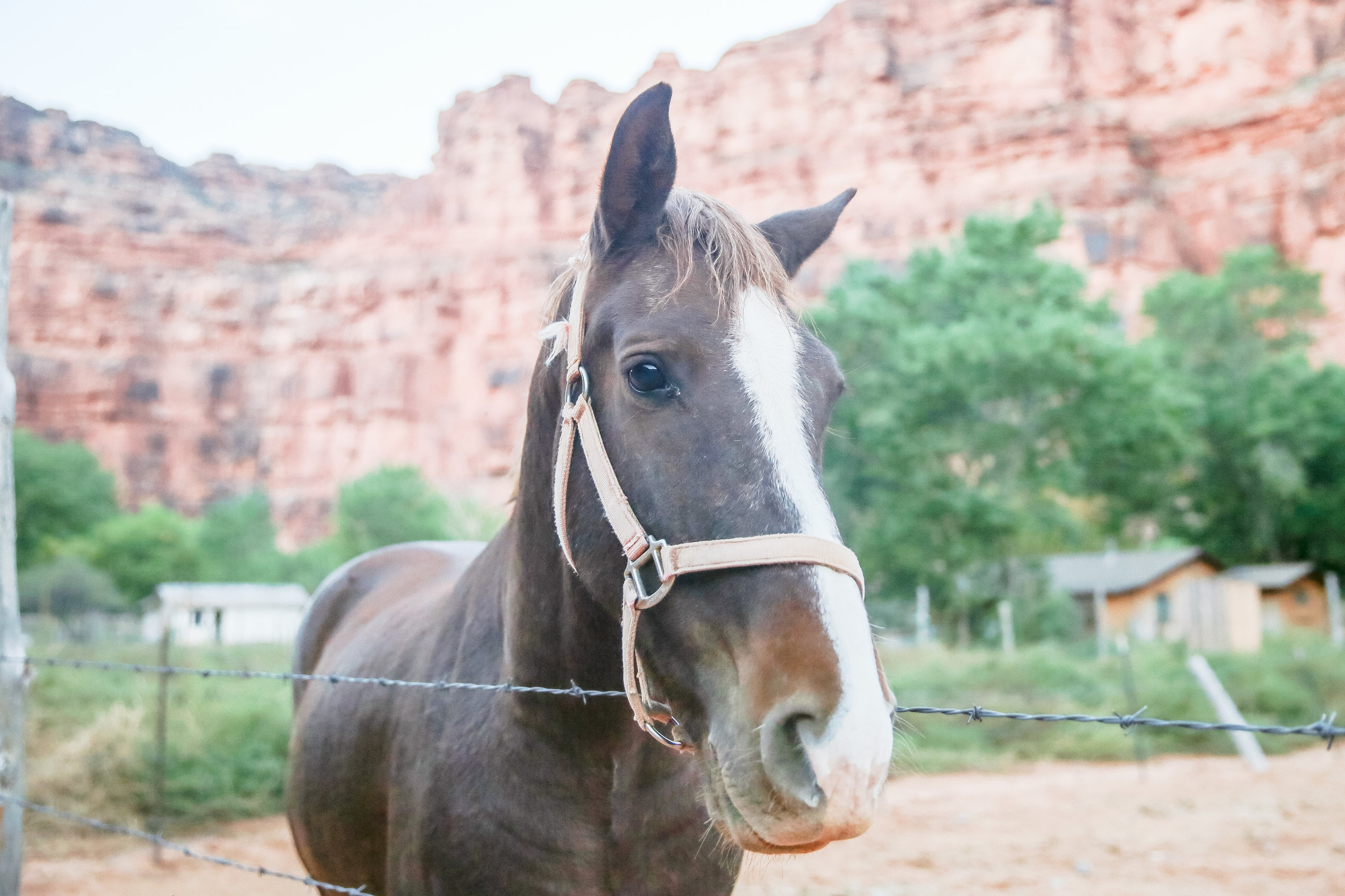 """I wanted to take this cutie home with me.   Every time we see a horse, Benny can't help but ask """"Why the long face?"""" heheheh"""