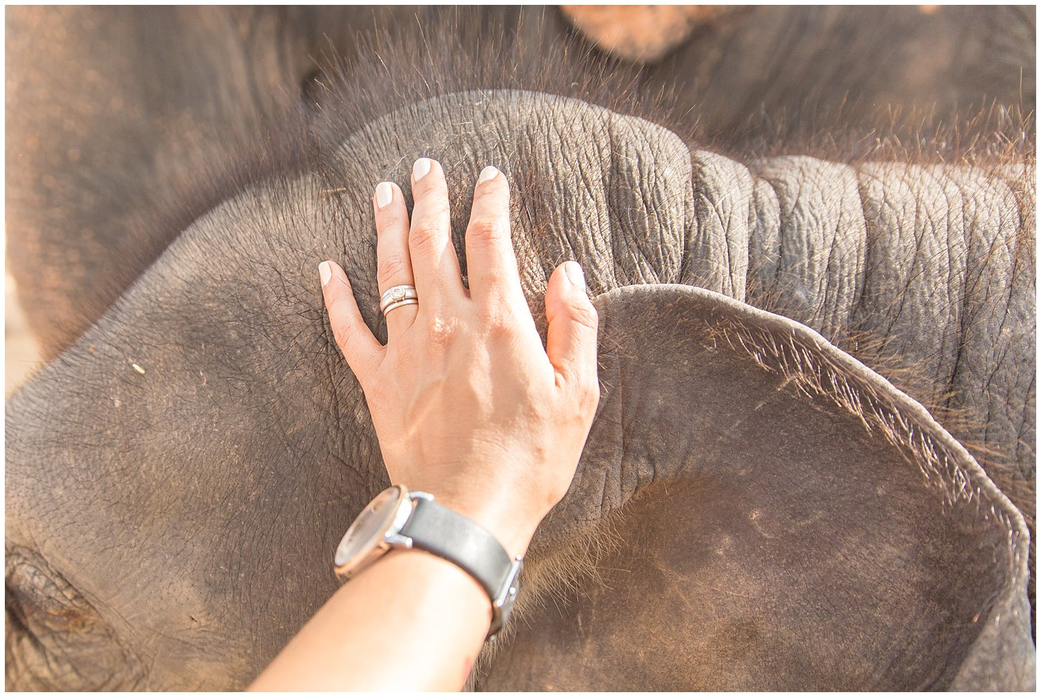 i'll never forget the tickle, prickly fuzz of this playful baby elephant! SO CUTE.