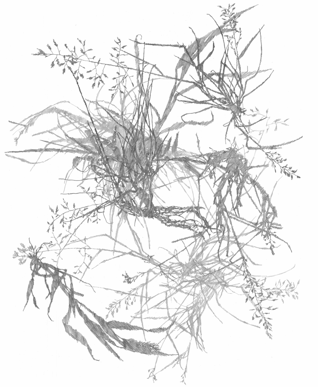 Plant Study 09
