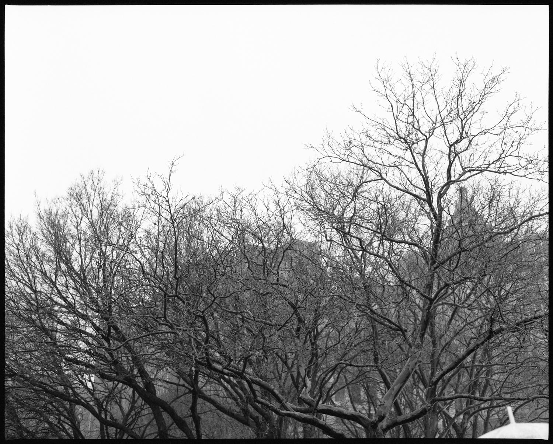 Battery Park, New York, 02.12.17