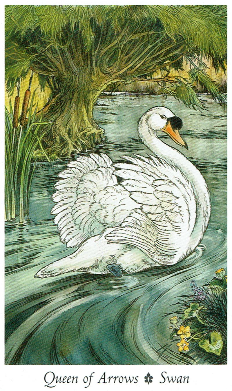 Queen of Arrows - Swan - Wildwood Tarot