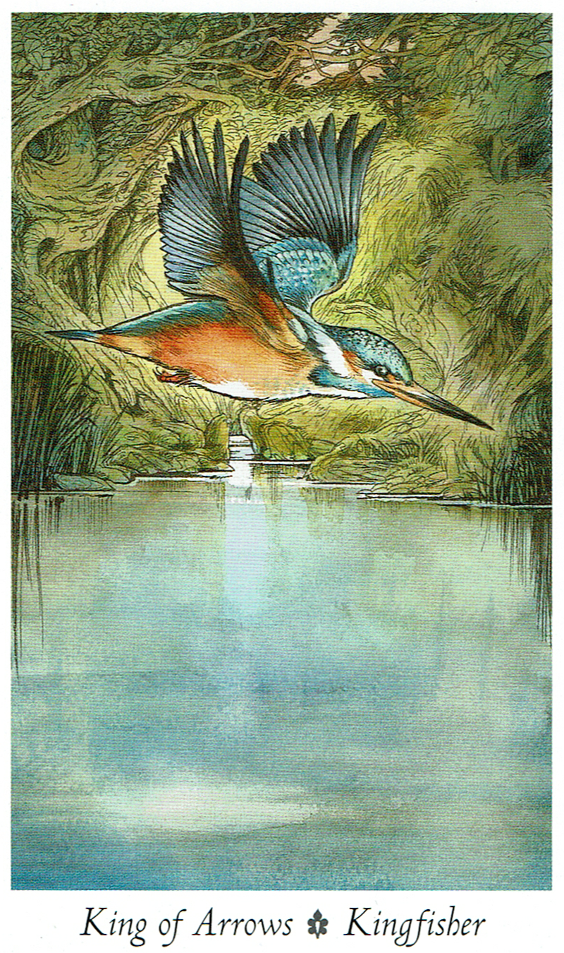King of Arrows - Kingfisher - Wildwood Tarot