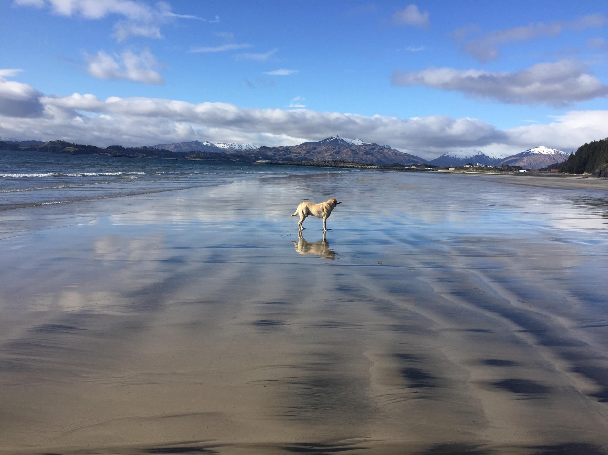 Max the Dog @Boyscout Beach Kodiak, AK
