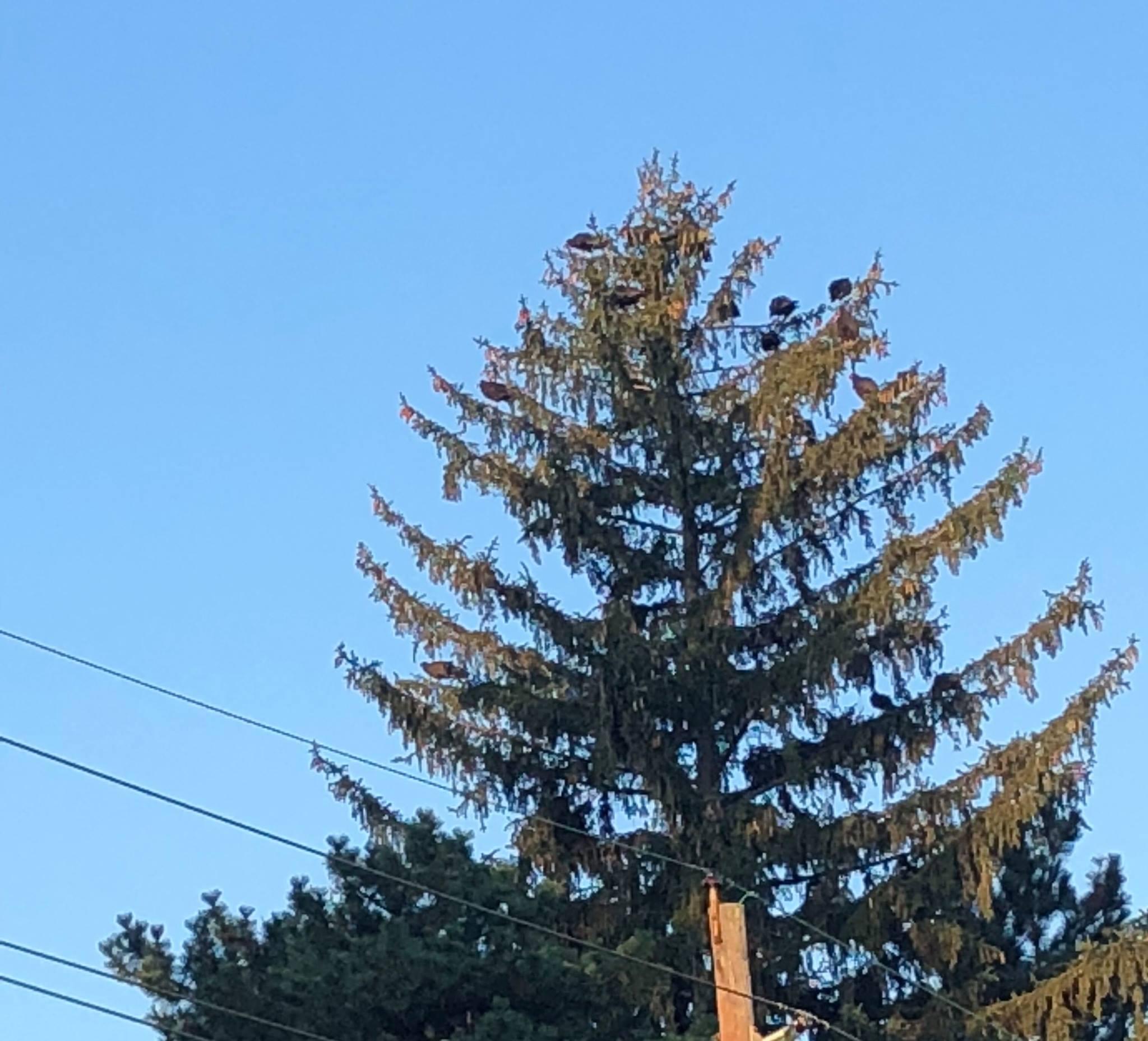 hawk trees