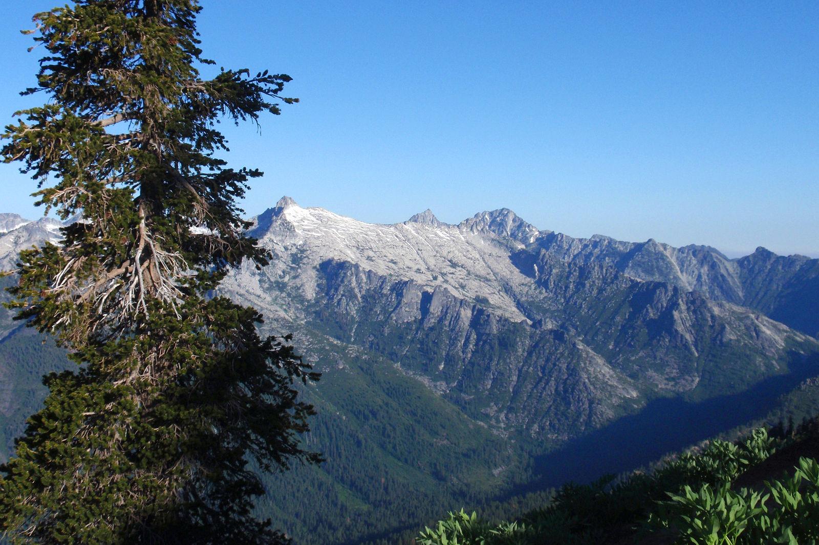 Trinity_Alps_Wilderness_with_Pinus_balfouriana.jpg