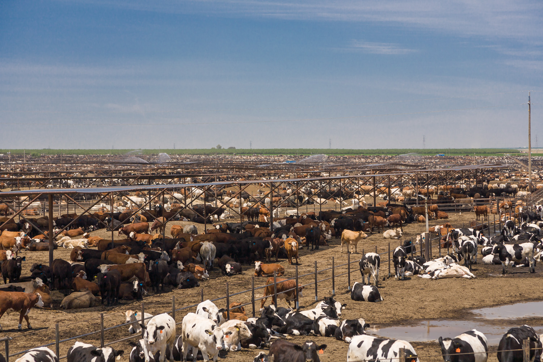 Harris Ranch, Near Coalinga