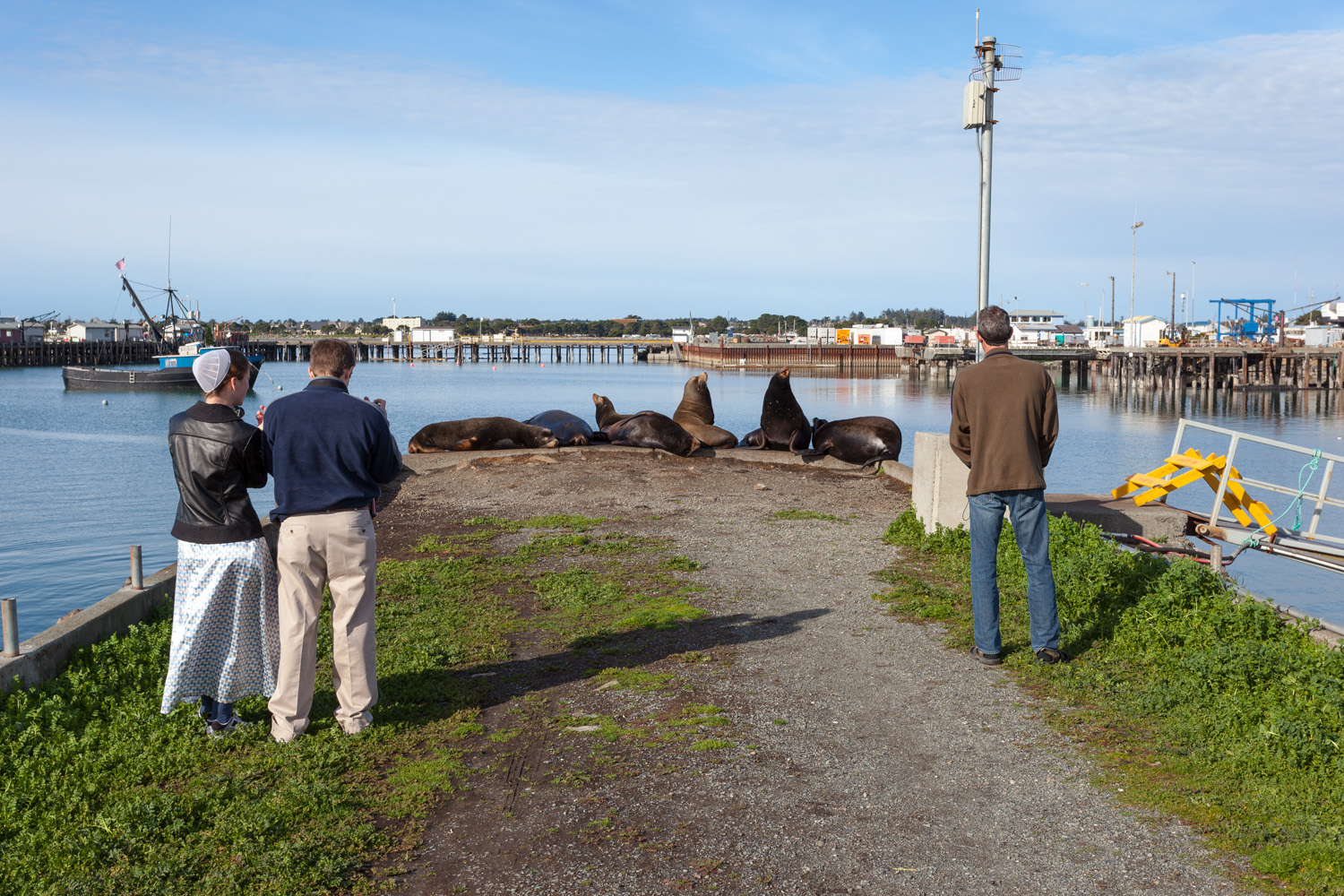 Sea Lions, Crescent City, California