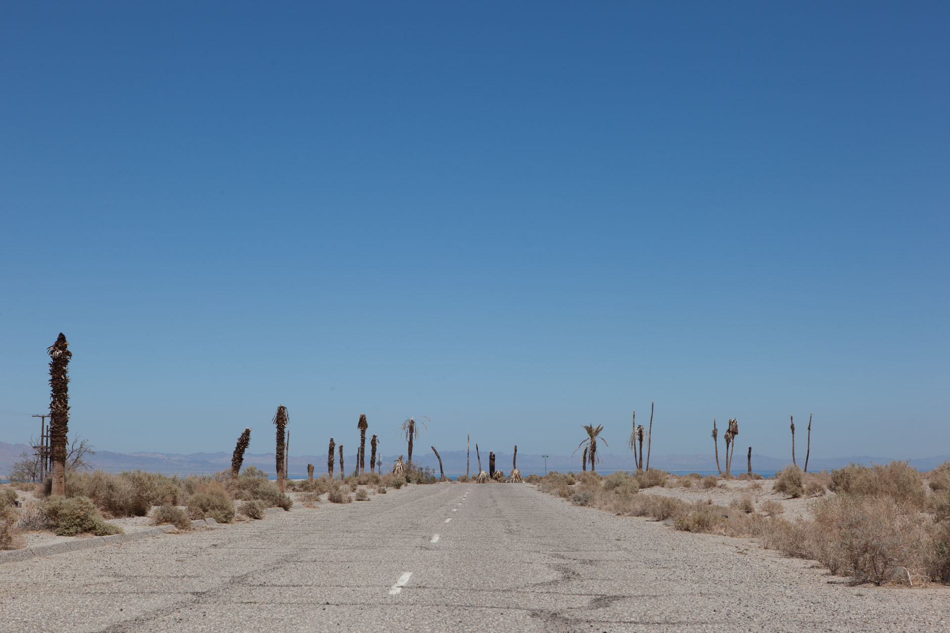 Perished Trees, Salton City