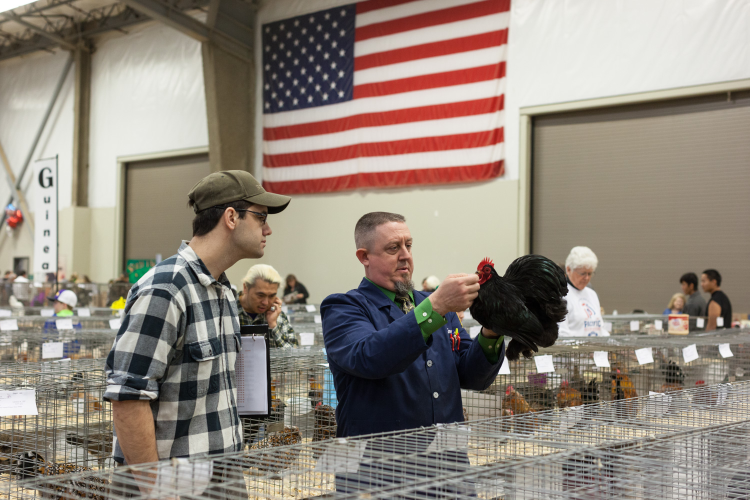 Judging, Pacific Poultry Breeders Show, Modesto