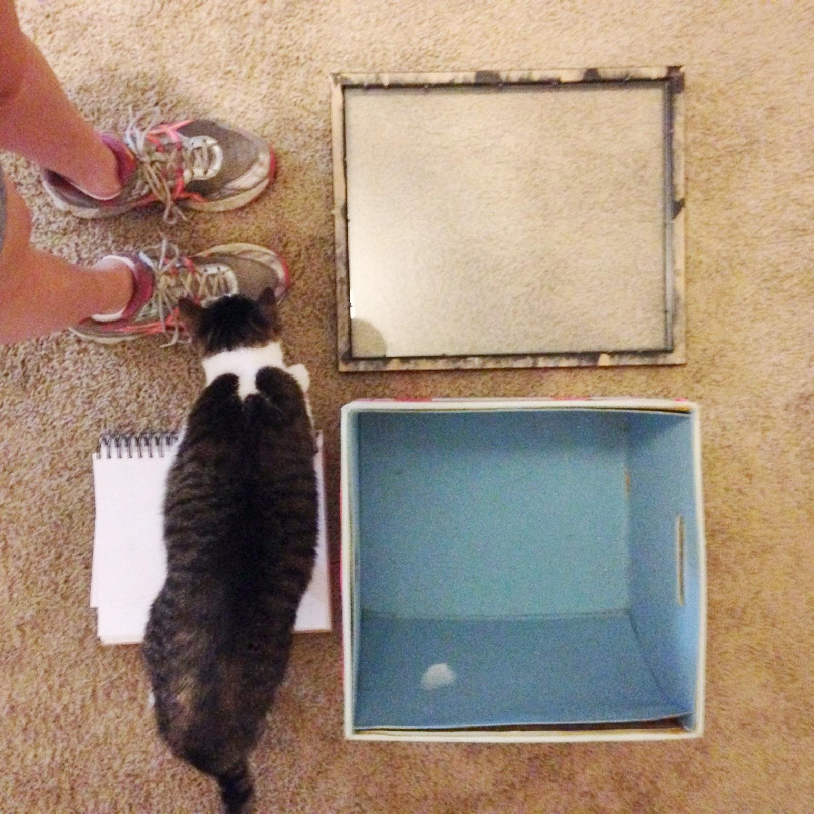 Studio cat Benji loves to get involved.