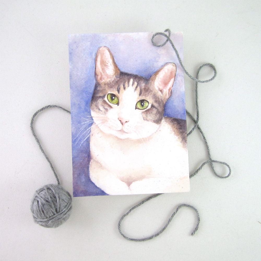 Studio cat Benji kindly posed for this sample portrait :)