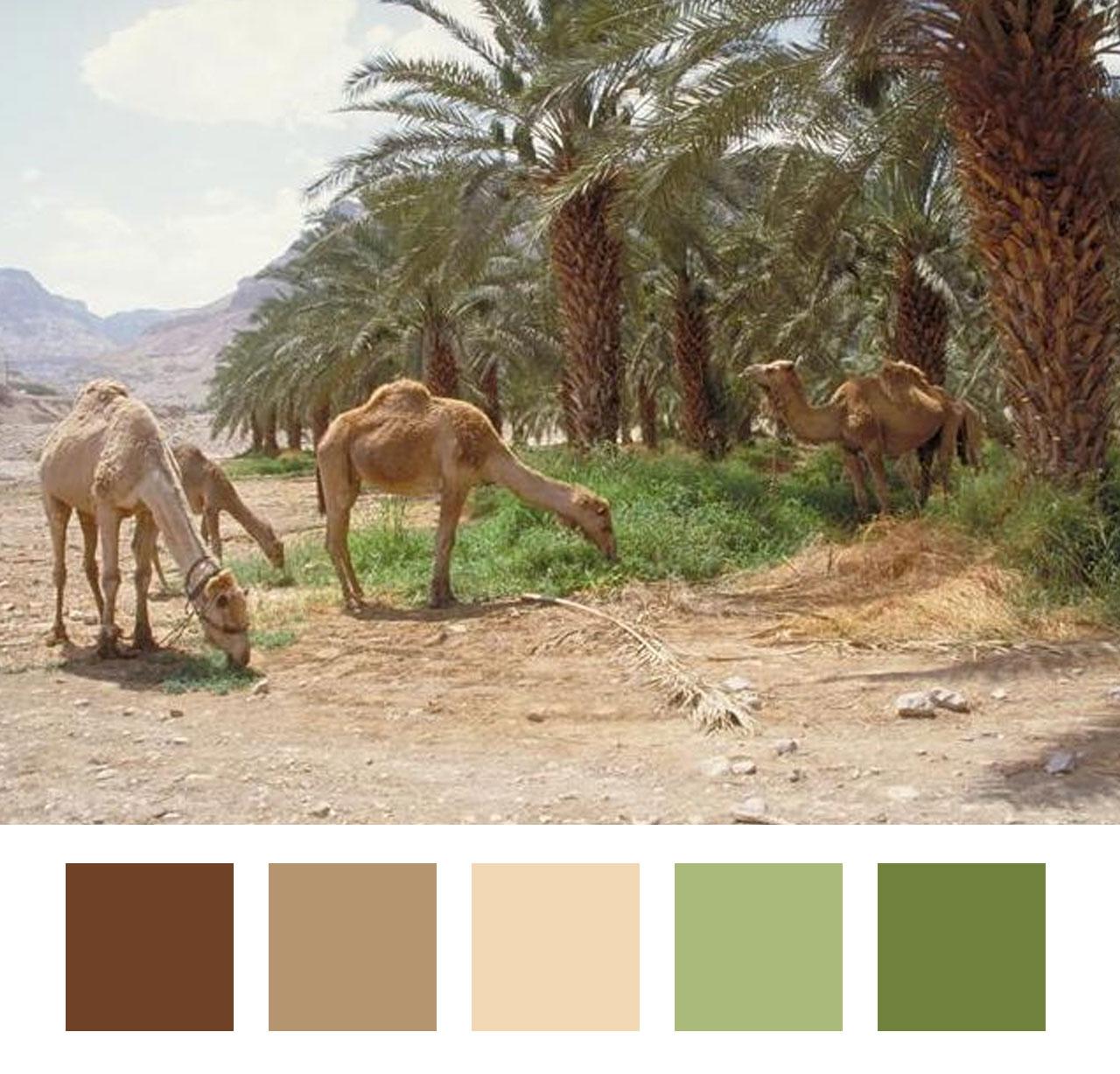 Desert scene | photo not mine - credit to come