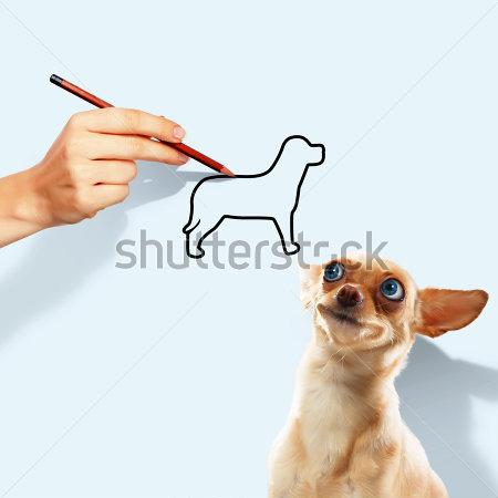 Blue-eyed dog
