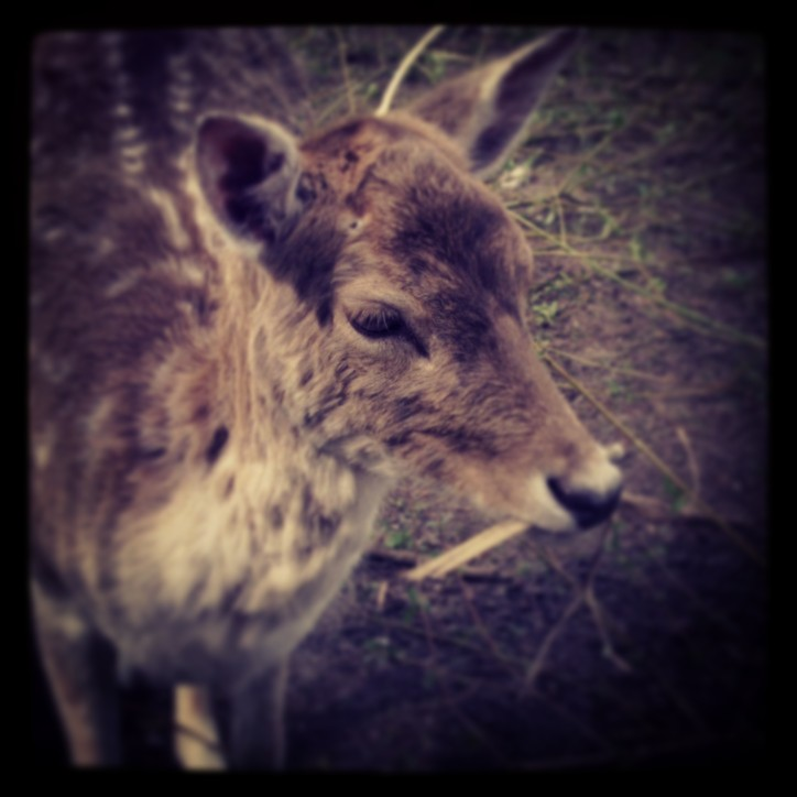 A little deer in Kralingse Bos in Rotterdam.
