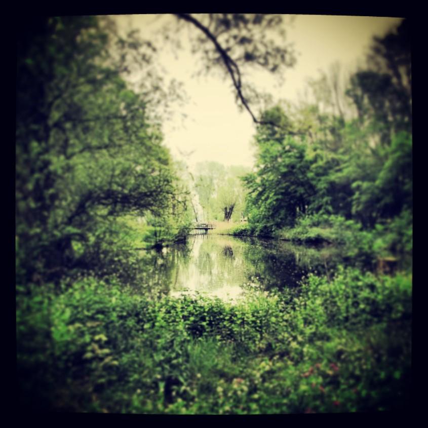 Beautiful image on Nature Sunday.