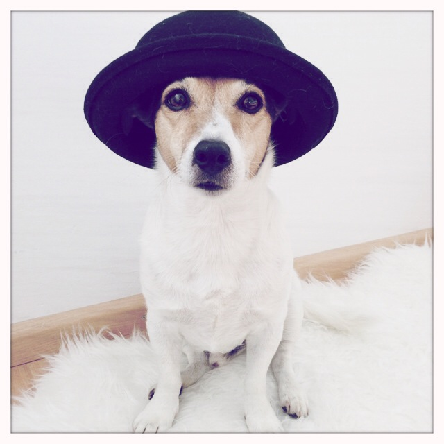 Floris wearing a hat. A lot of people love seeing Floris every wednesday. Curious what he will be wearing :)