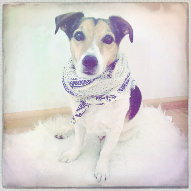 Floris wears it better than me! Astrid her favorite scarf looks better on Floris than on herself.