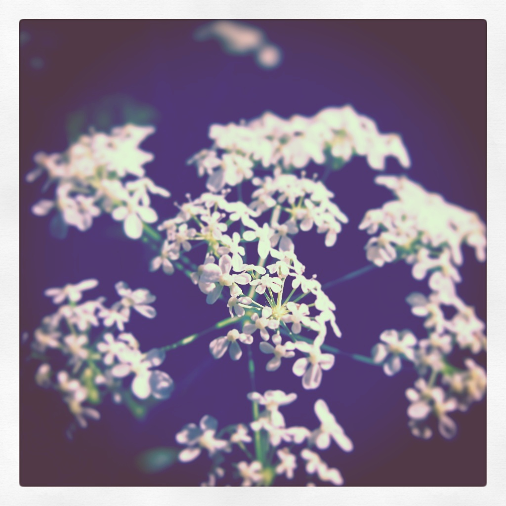 This is how flowers look in our dreams. Beautiful and sereen.