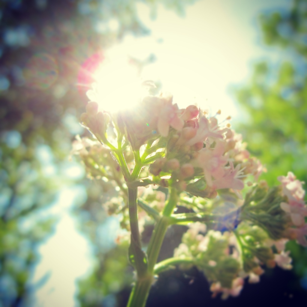 This photo shows how beautiful the sun and flowers work together. Perfect for Nature Sunday!