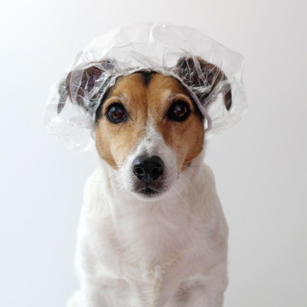 hond-badmuts.jpg