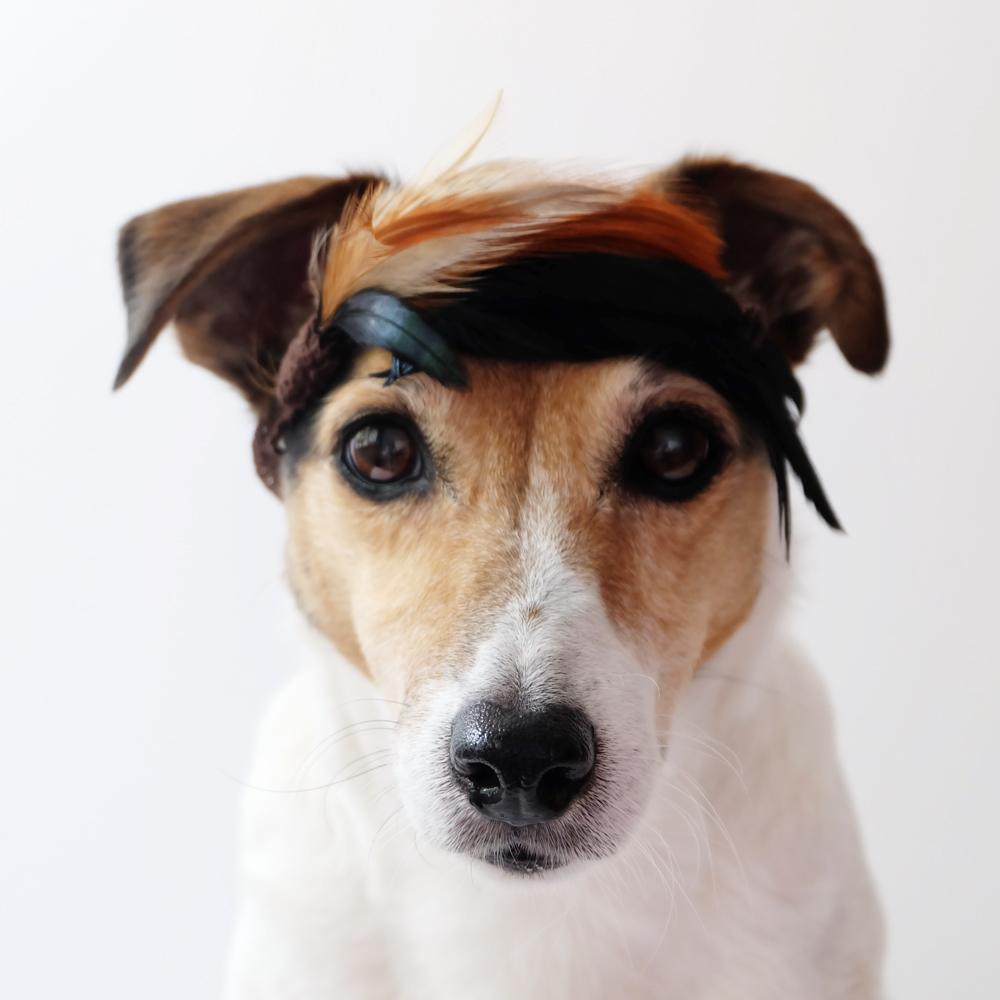 my-dog-wears-it-better-73.jpg