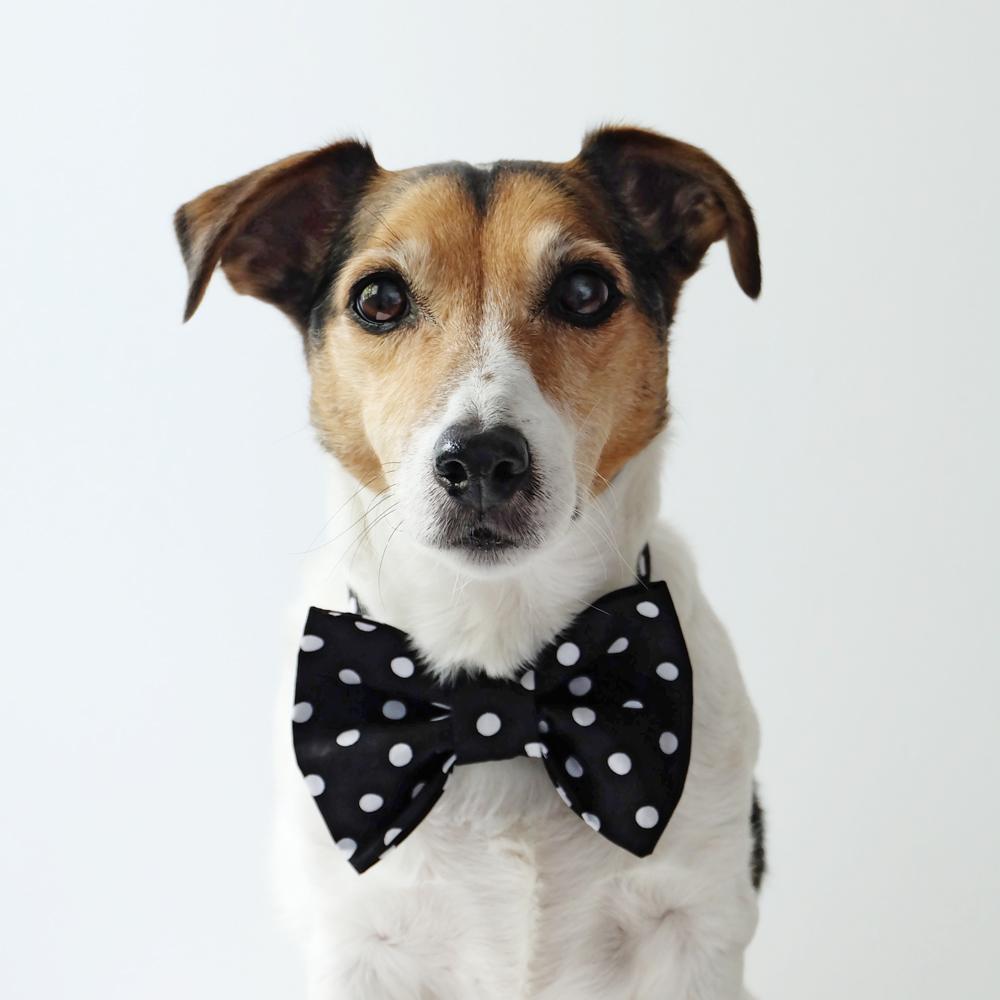 my-dog-wears-it-better-than-me-78.jpg