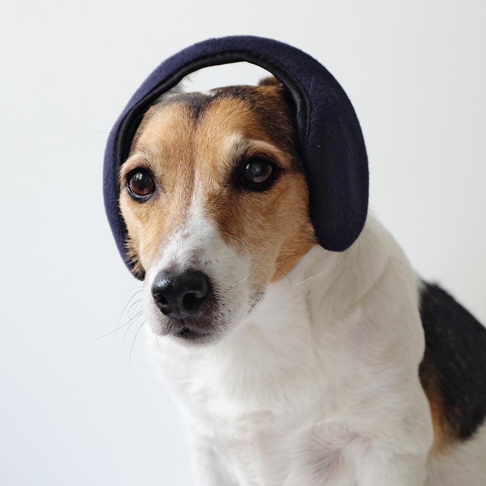 my-dog-wears-it-better-than-me-84.jpg