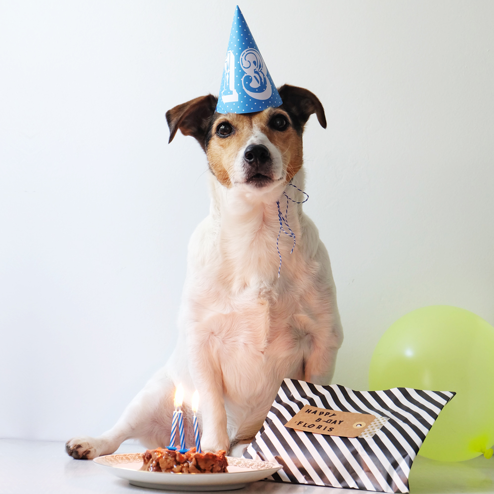 birthday-dog.jpg