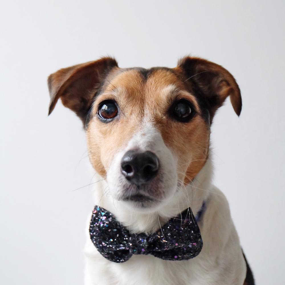 bowtie-dog.jpg