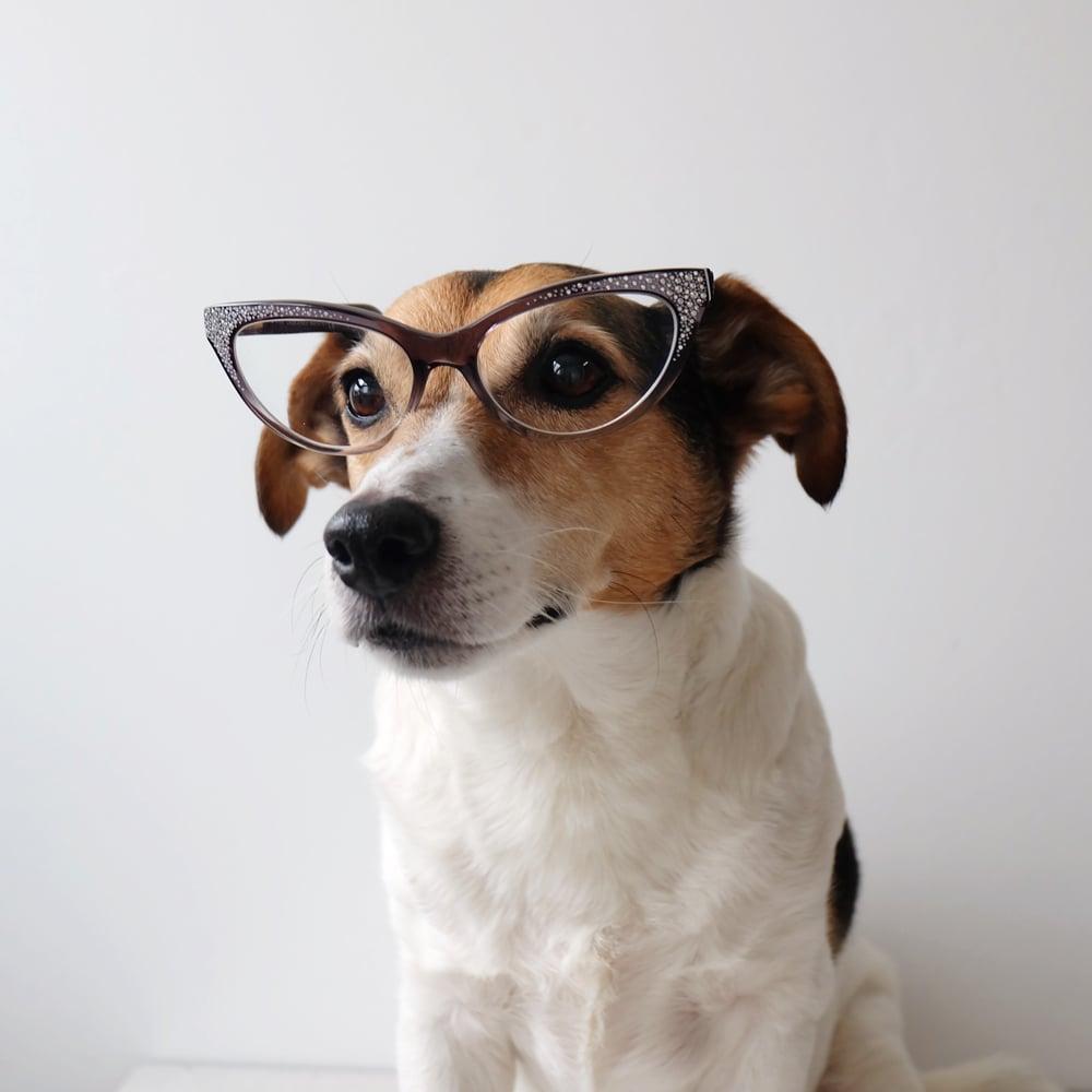 my-dog-wears-it-better.jpg