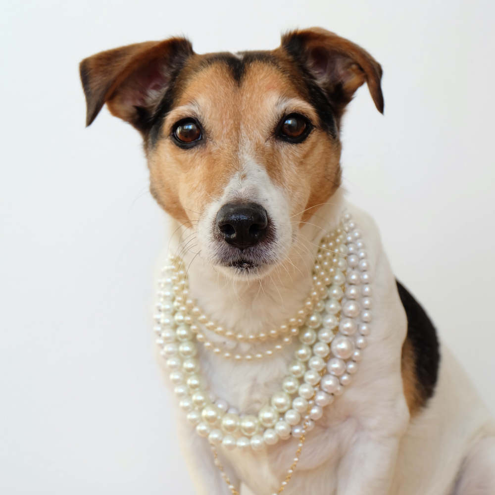 my-dog-wears-it-better-than-me-96.jpg