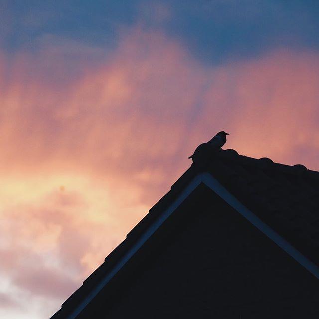 Hallo klein vogeltje! Al zoveel mooie zonsondergangen gezien sinds we verhuisd zijn 😬.