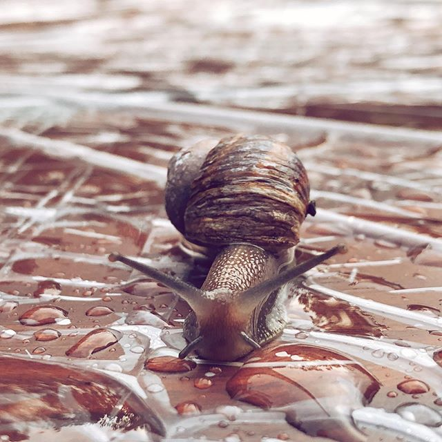 Ook regen heeft zijn mooie momenten! . . . #rain #rainyday☔ #snail #snailshell #nature #naturephotography #naturelovers #slak #natuur #natuurfotografie #vught #lente #spring #animals #slow #traveling #nature_good #nature_perfection #cute #instagood #instanature #newphone #shotoniphone
