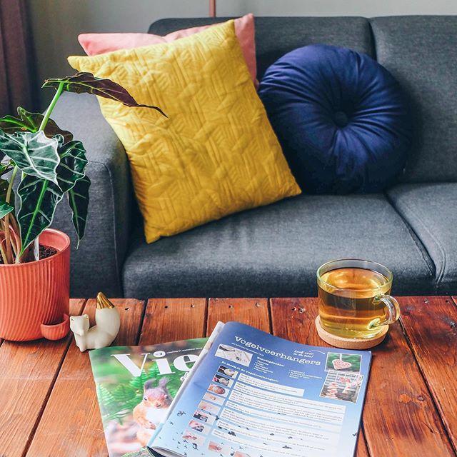 Het blijft altijd leuk om je eigen #diy terug te zien in magazines! De DIY vogelvoerhangers staat in het nieuwste herfstmagazine van @nederlandsdagblad. . . . #diycrafts #autumn #fall #herfst #magazine #nederlandsdagblad #cozy #cozyhome #autumnvibes🍁 #homedecor #homeinspiration #birds #tijdschrift #interiordesign #interior #interiør #home #blog #doityourself #colorful #blogging #handmade #reading