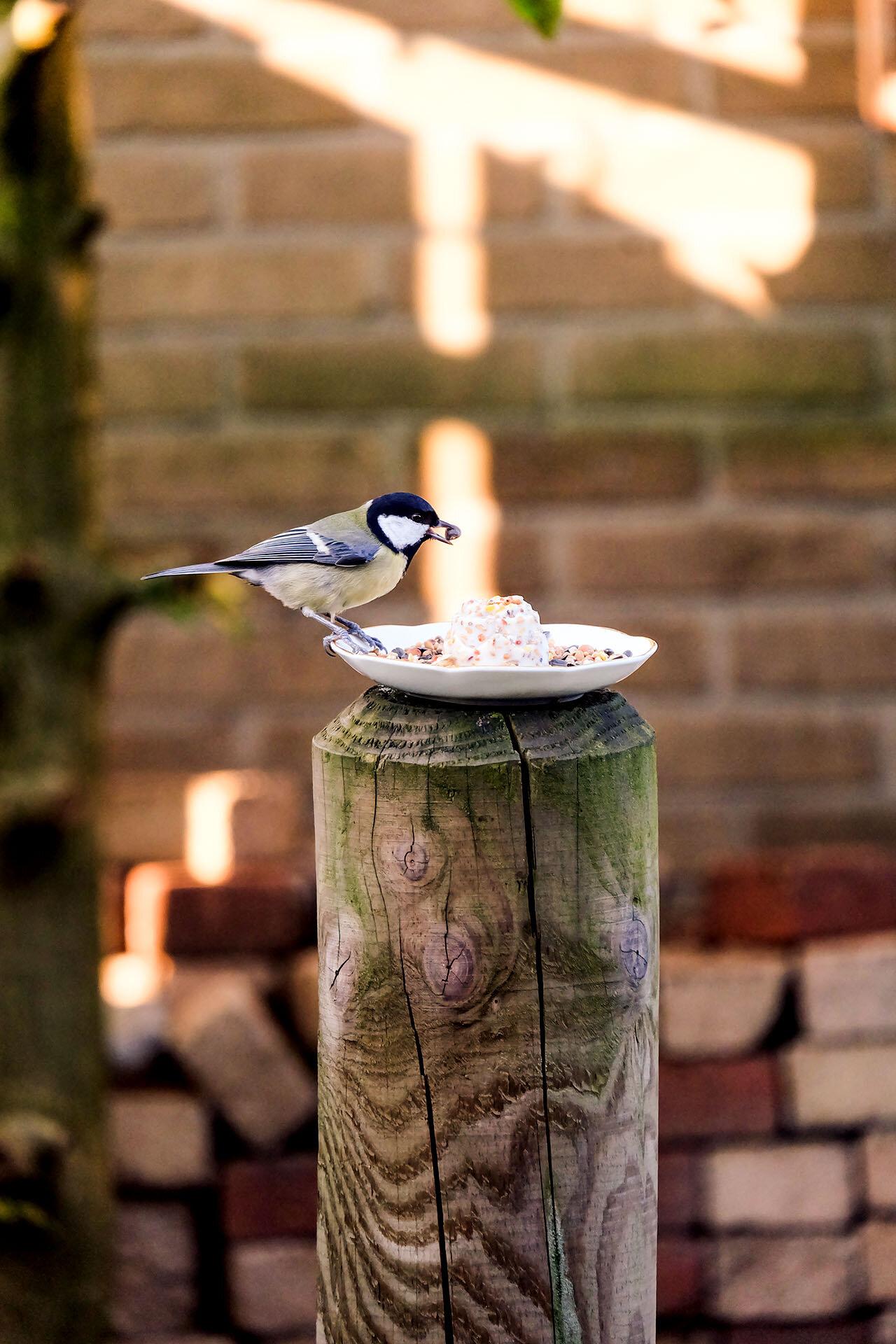 Vogelvoertaartje met koolmeesje.jpg